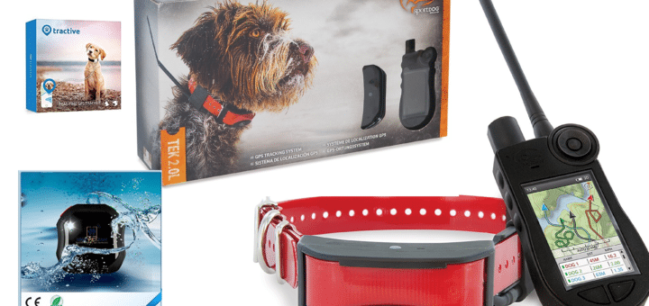 dog tracking systems