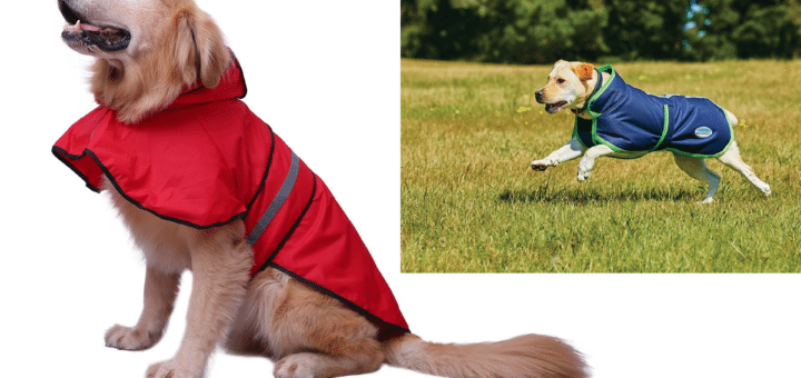 The 10 Best Waterproof Dog Coats And Comfy Puppy Jackets In Uk