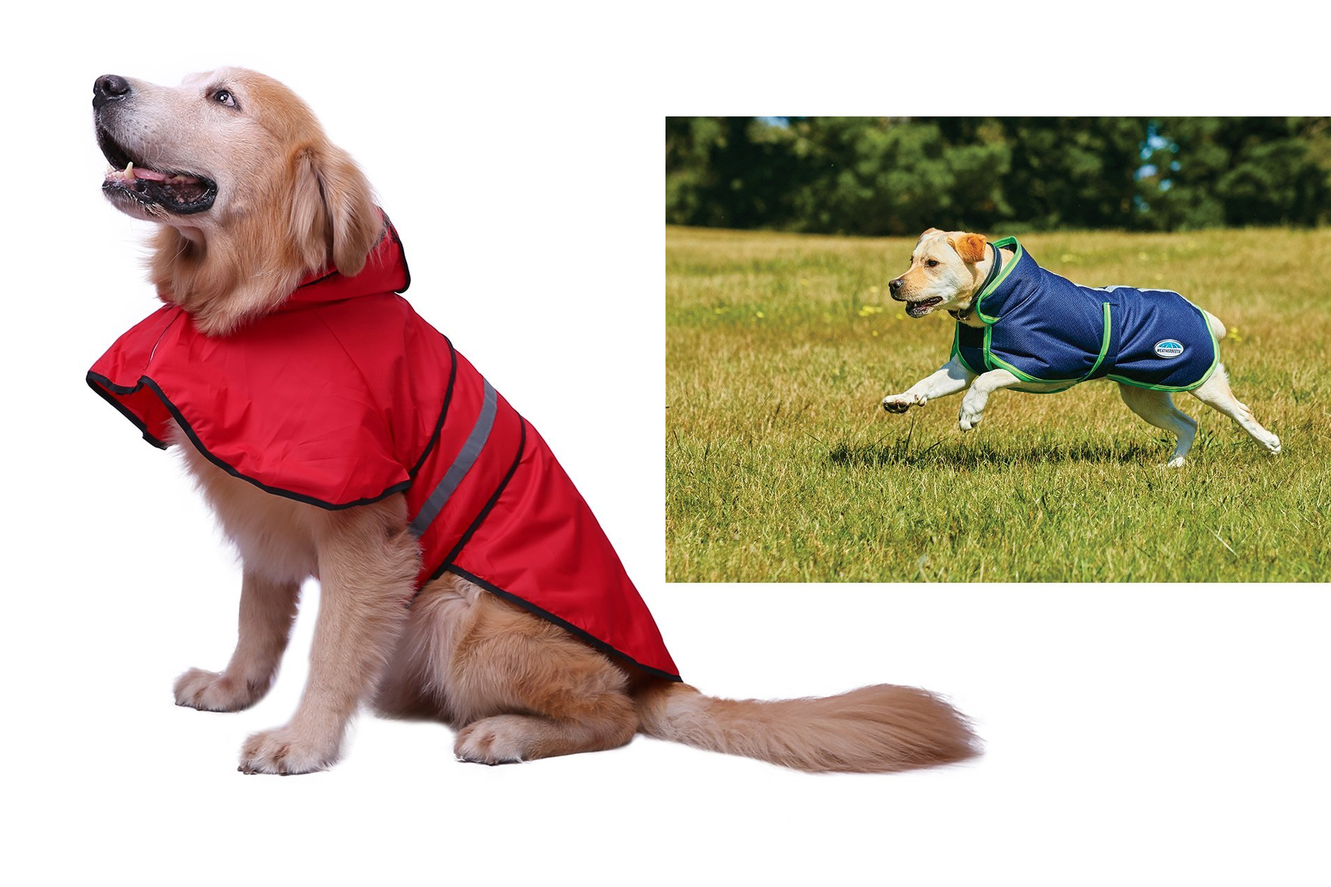 3e50cf5ef4f17 The 10 Best Waterproof Dog Coats and Comfy Puppy Jackets in UK ...
