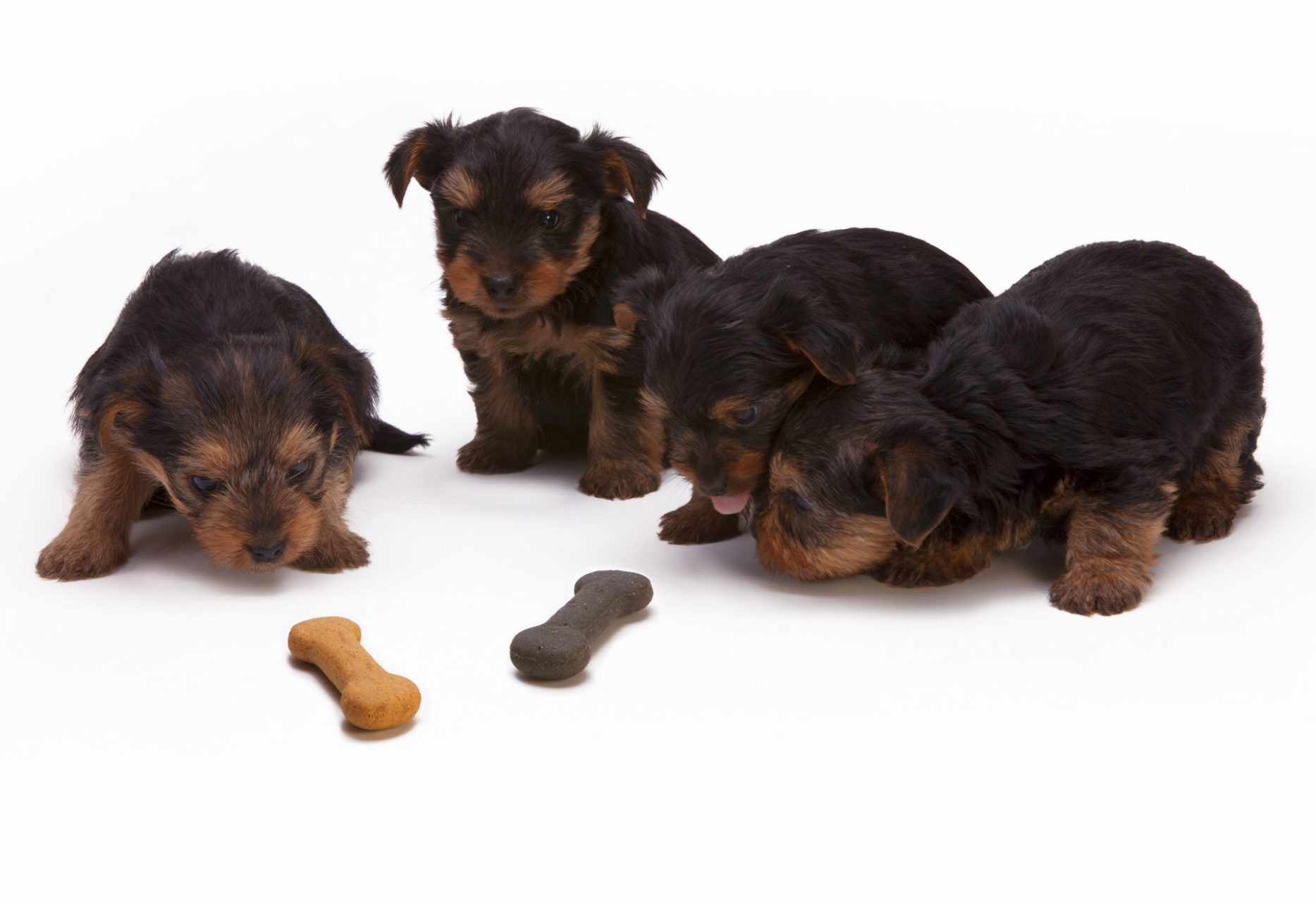 10 of the Best Dry Puppy Food Brands in UK - 2019